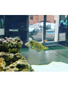 Peces marinos-Plantasygambas.com