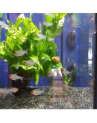 Tetras-Plantasygambas.com