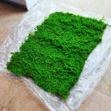 """En @plantasygambasandreef_madrid te recibimos con la alfombra verde de Micrantemun """"Monte Carlo"""" by @tivamo_ug  Disponible completa o en porciones para dejar tu acuario tapizado al momento y sin esperas.  Recuerda que todas las compras online entran en el sorteo de un lote de plantas de @tivamo_ug valorado en 50€ hasta el 20 de Julio.   ¿Y tú a que esperas para participar?"""
